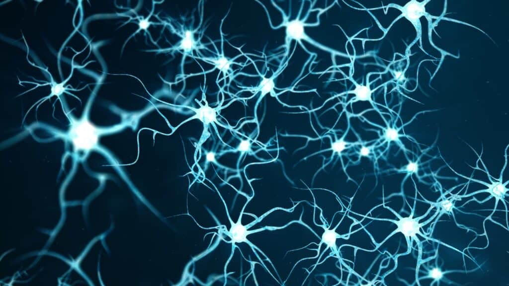 brain cells and their connections